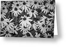 4400- Daisies Black And White Greeting Card