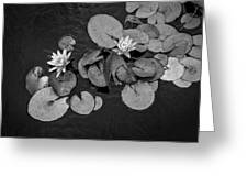 4425- Lily Pad Black And White Greeting Card
