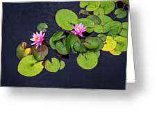 4425- Lily Pads Greeting Card