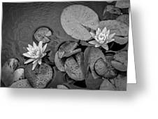 4432- Lily Pads Black And White Greeting Card