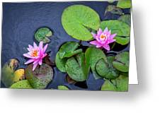 4432- Lily Pads Greeting Card