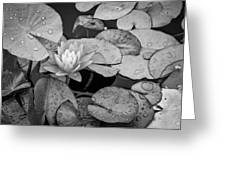 4434- Lily Pads Black And White Greeting Card