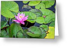 4434- Lily Pads Greeting Card