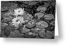 4445- Lily Pads Black And White Greeting Card