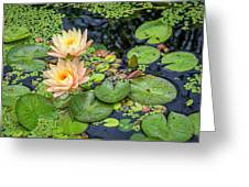 4445- Lily Pads Greeting Card