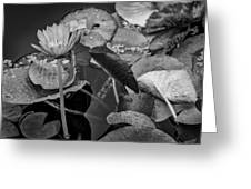 4466- Lily Pads Black And White Greeting Card