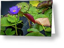 4466- Lily Pads Greeting Card