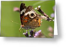 4467 - Butterfly Greeting Card