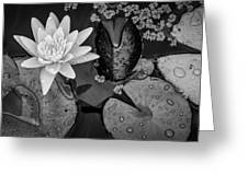 4475- Lily Pads Black And White Greeting Card