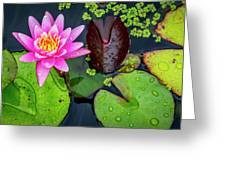 4475- Lily Pads Greeting Card