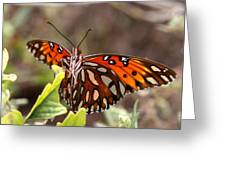 4529 - Butterfly Greeting Card