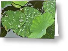 4634- Lilypad Greeting Card
