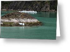Alaska_00047 Greeting Card
