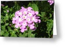 Australia - Pink Flowers Greeting Card
