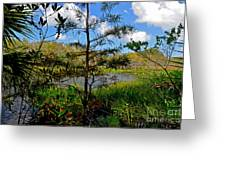 49- Florida Everglades Greeting Card