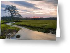 New Forest - England Greeting Card