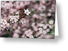 Tree Blossoms Greeting Card