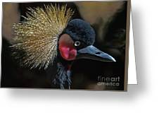 49- West African Crowned Crane Greeting Card
