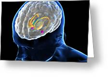 Anatomy Of The Brain Greeting Card