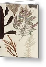 Aquatic Animals - Seafood - Algae - Seaplants - Coral Greeting Card