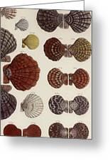 Aquatic Animals - Seafood - Shells - Mussels Greeting Card