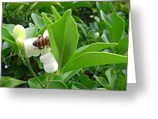 Australia - The Bees Greeting Card