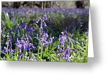 Bluebells Near Effingham In The Surrey Hills England Uk Greeting Card