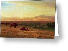 Buffalo On The Plains Greeting Card