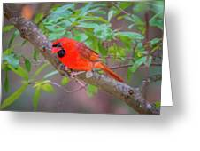 Cardinal Birds Hanging Out On A Tree Greeting Card