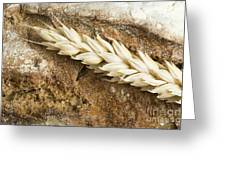 Close Up Bread And Wheat Cereal Crops Greeting Card