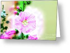 Common Hollyhock  Greeting Card