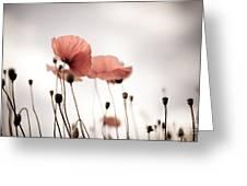Corn Poppy Flowers Greeting Card by Nailia Schwarz
