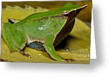 Darwins Frog Greeting Card
