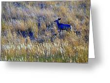Deer Outdoors. Greeting Card