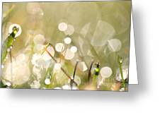 Dew In Grasses Greeting Card