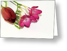 Freesia And Tulip Greeting Card