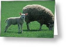 Lamb Chop With Mother Greeting Card