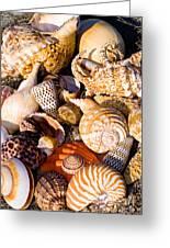 Mix Group Of Seashells Greeting Card