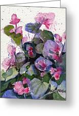 My Annual Begonias Greeting Card
