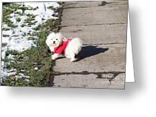 My Small Dog Greeting Card