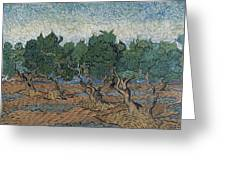Olive Grove Greeting Card