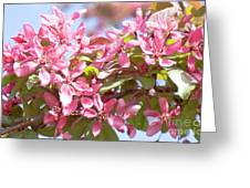 Pink Cherry Flowers Greeting Card