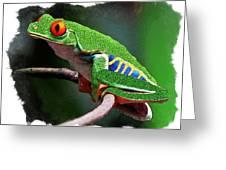 Red-eyed Leaf Frog Greeting Card