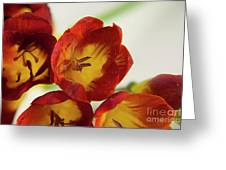 Red Freesia Greeting Card