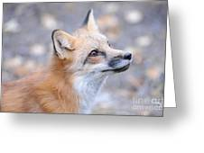 Red Tailed Fox Greeting Card