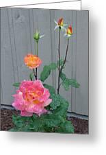 5 Roses In Rain Greeting Card