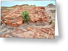 Sandstone Color In Valley Of Fire Greeting Card