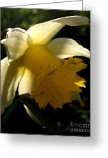 Scent Of Spring Greeting Card