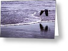 Sea Birds Greeting Card