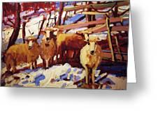 5 Sheep Greeting Card